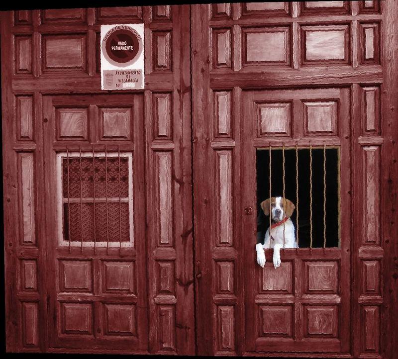 Perro en la ventanilla-III