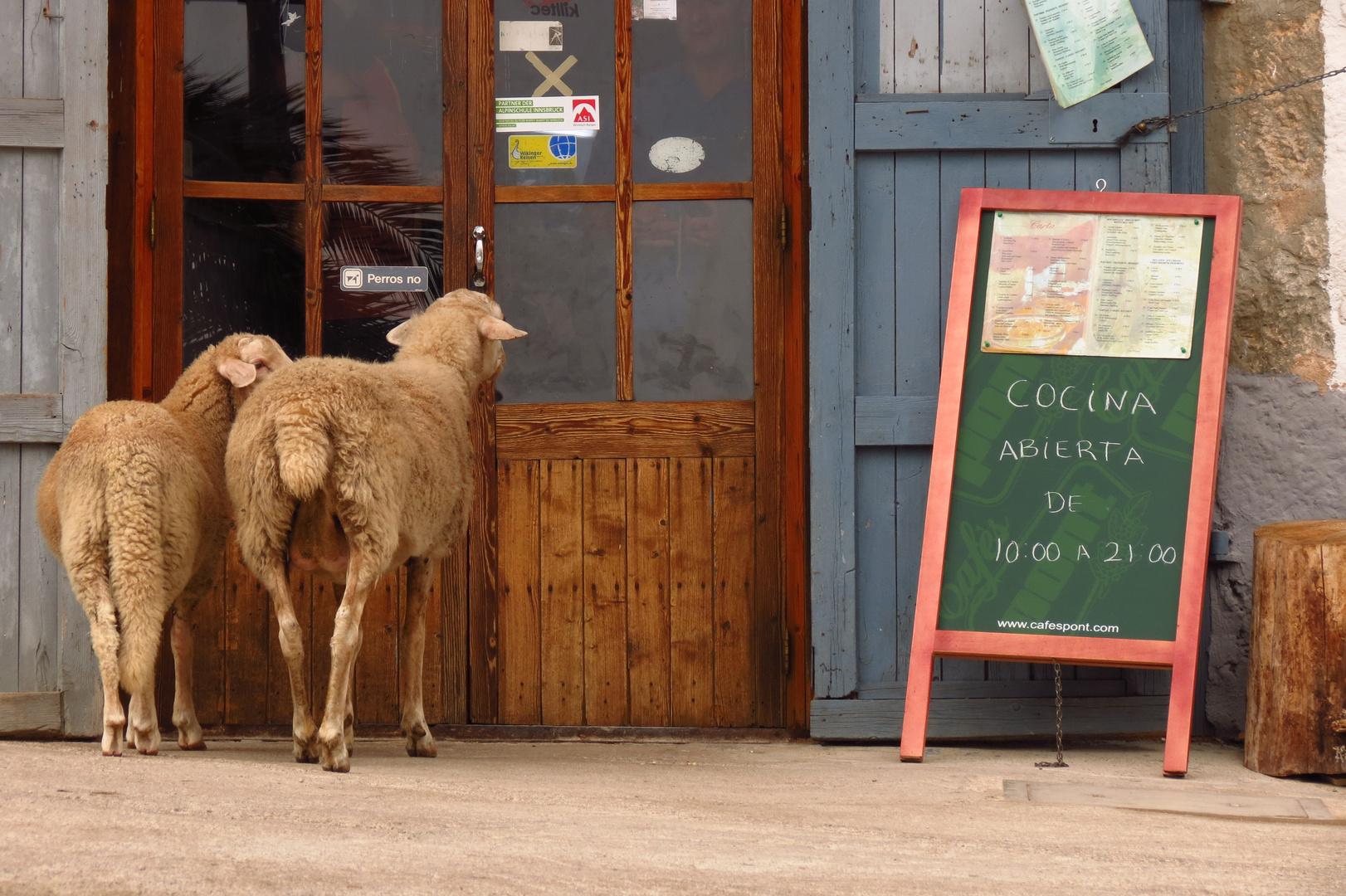 Perros no / Hunde nicht erlaubt! - Und Schafe?