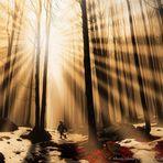 Persa nel bosco