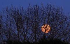 Persiennes pour clair de lune