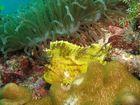 pesce foglia