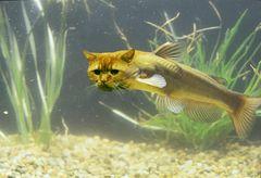 Pesce gatto..ovvio