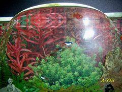 pesce nel pallone