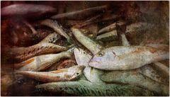 pescheria vecchia