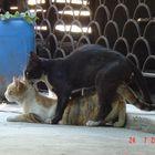 pet cats... :)