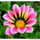 Petals & Colors