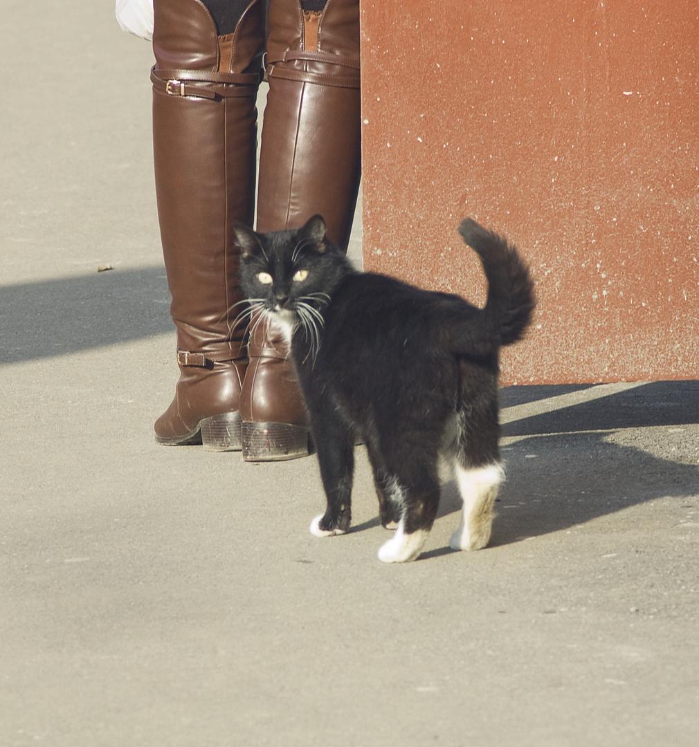 Petersburg cat.