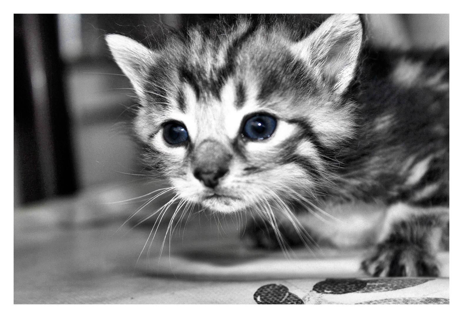 petit chaton