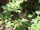 Petit chaton caché