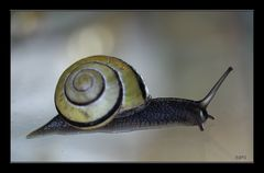 petit escargot