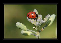 petit insecte