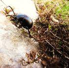 Petit insecte.