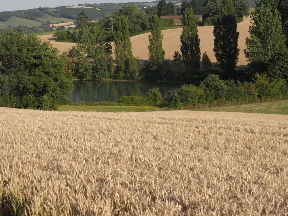 petit lac dans la campagne
