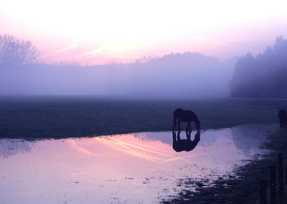 Petit matin à Han-sur-Lesse