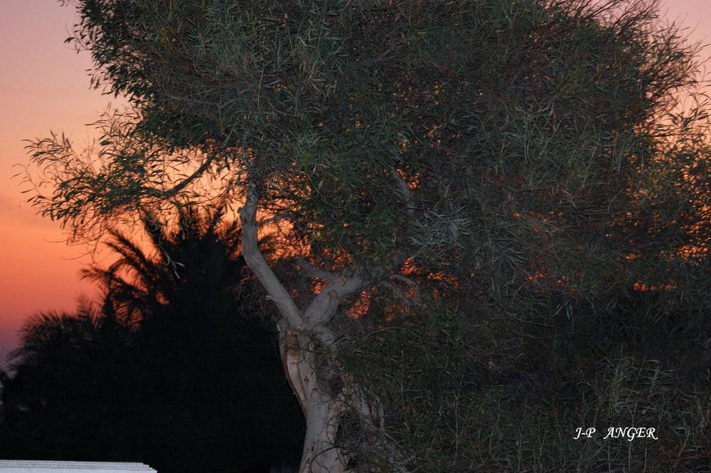 Petit matin en Tunisie