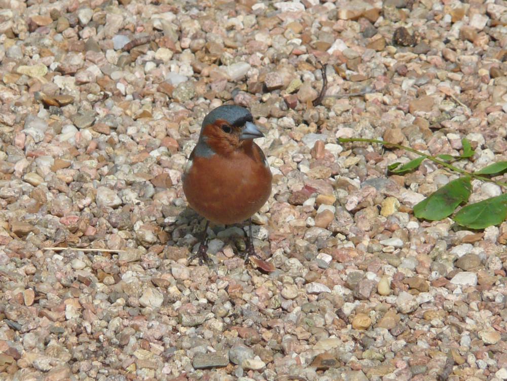 petit oiseau de parc