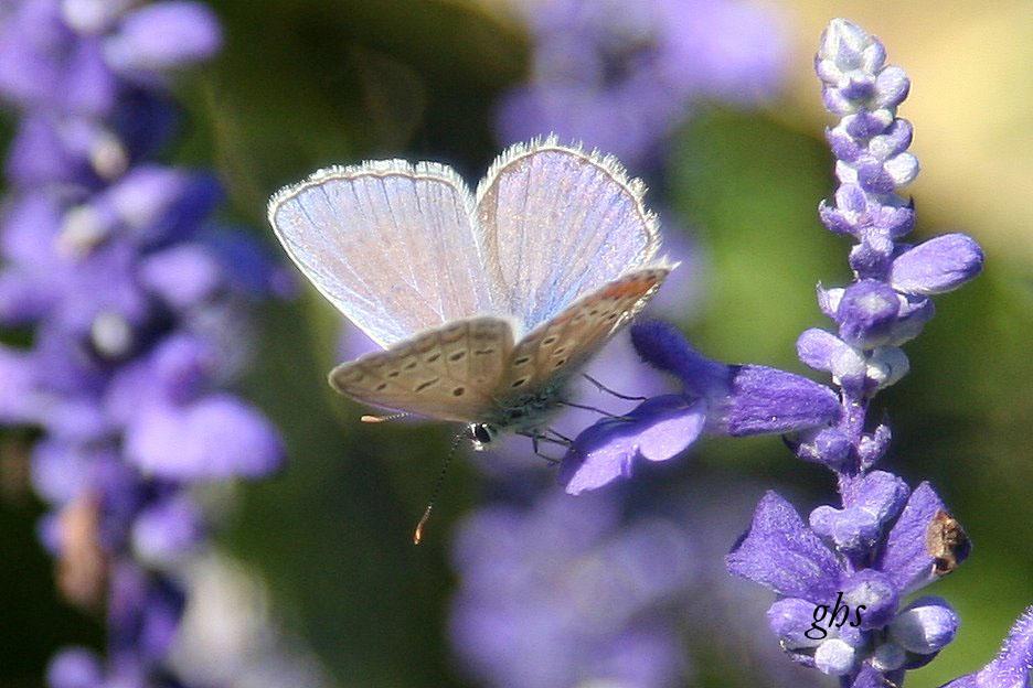 petit papillon 2