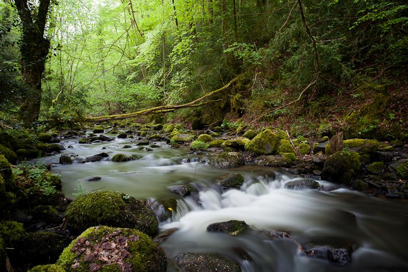 Petit ruisseau qui court et sautille gentillement dans les sous-bois verts ! (ouf !)