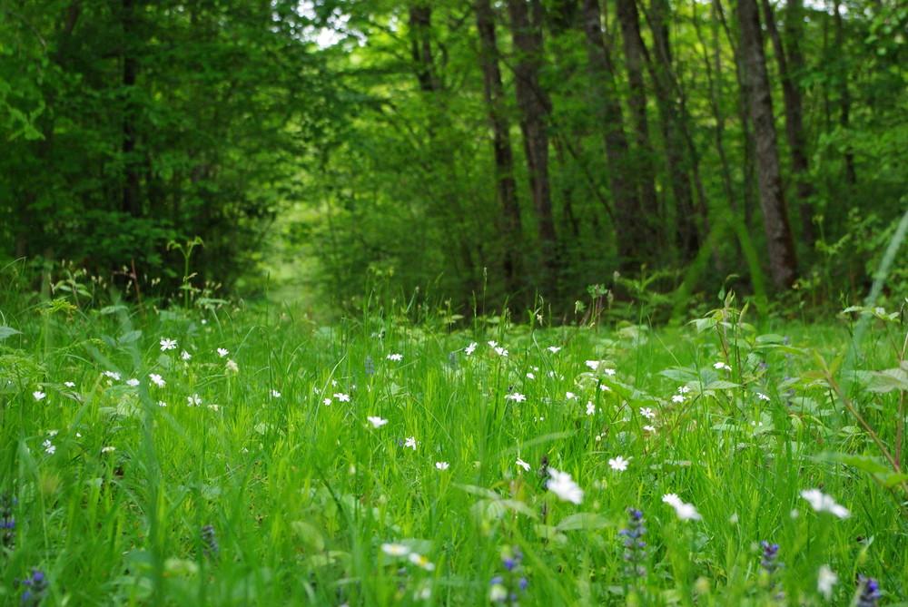 petite clairiere dans les bois