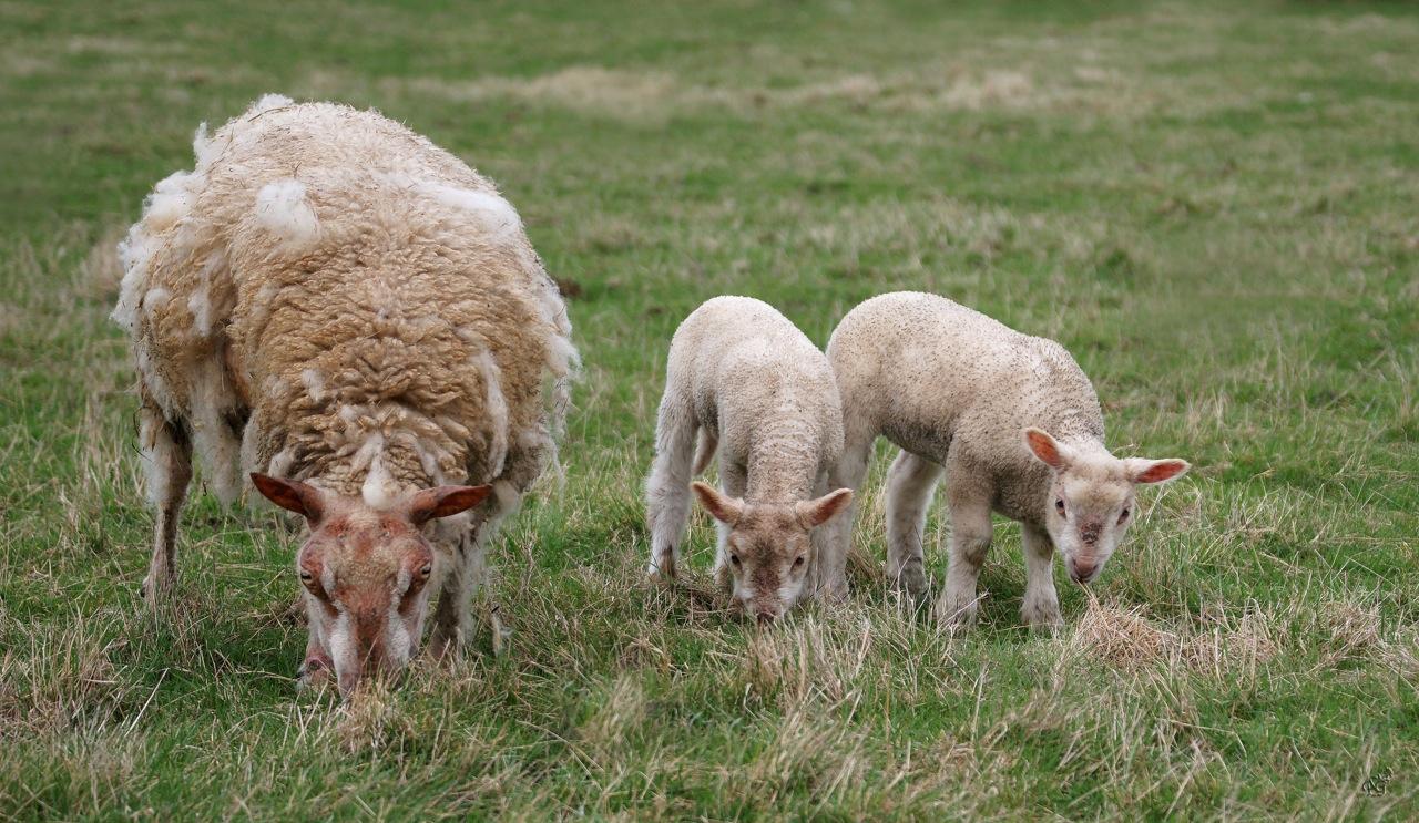 Petite famille dans le pré