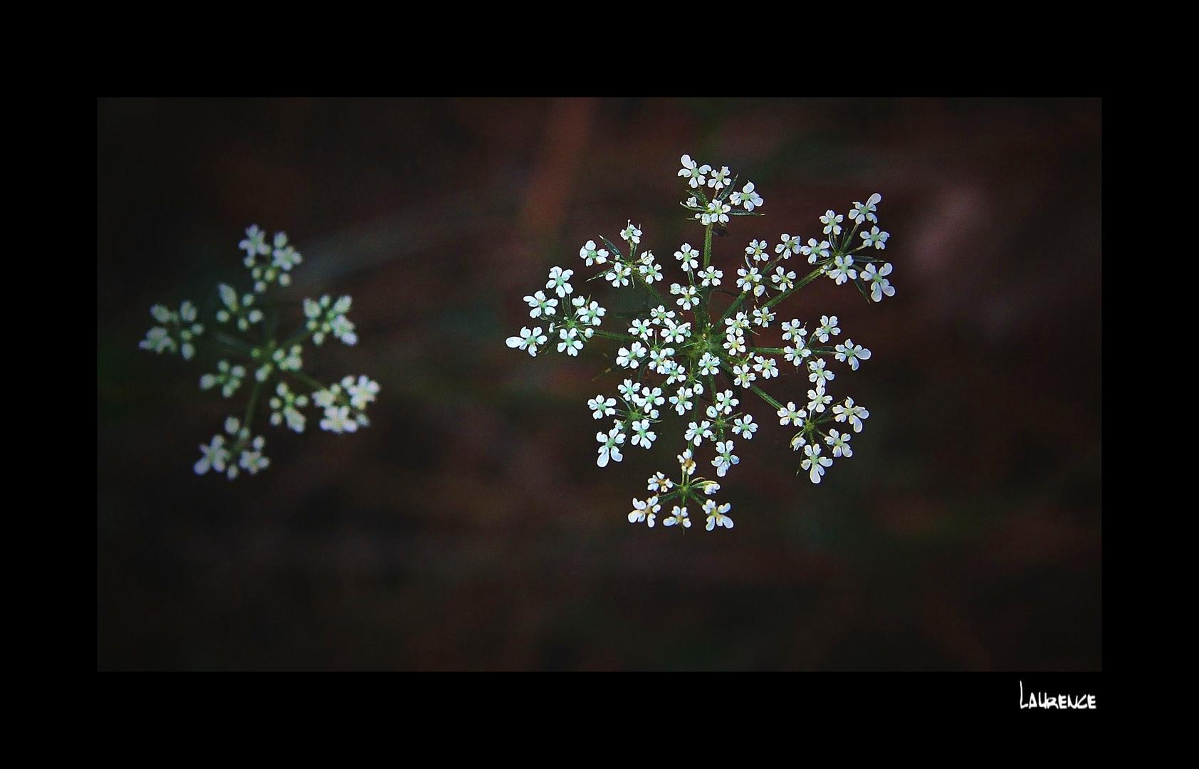 Petite fleur.