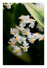 Petite Fleur-2