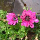 Petite fleur...