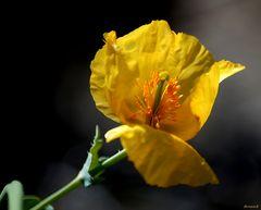 Petite fleur jaune