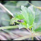 petite mouche sur le feuillage vert