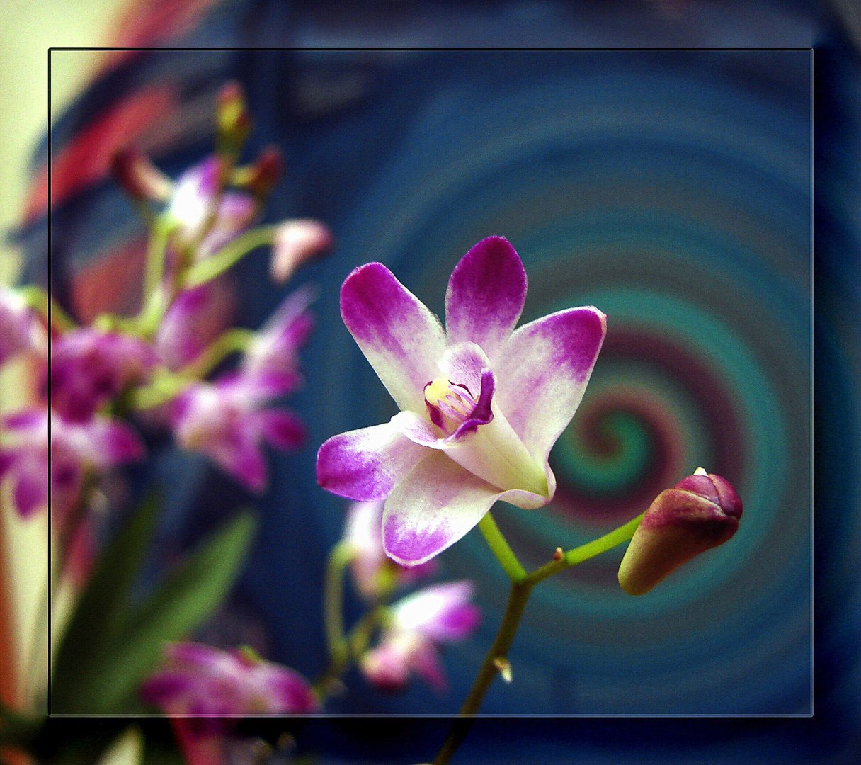 Petite orchidée.