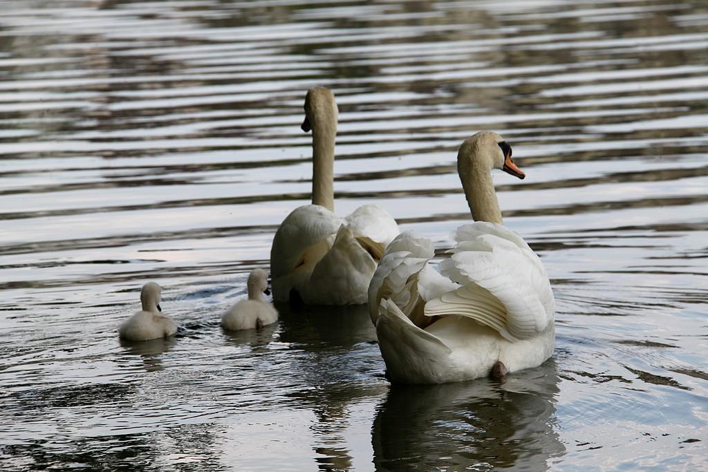 Petite promenade en famille!