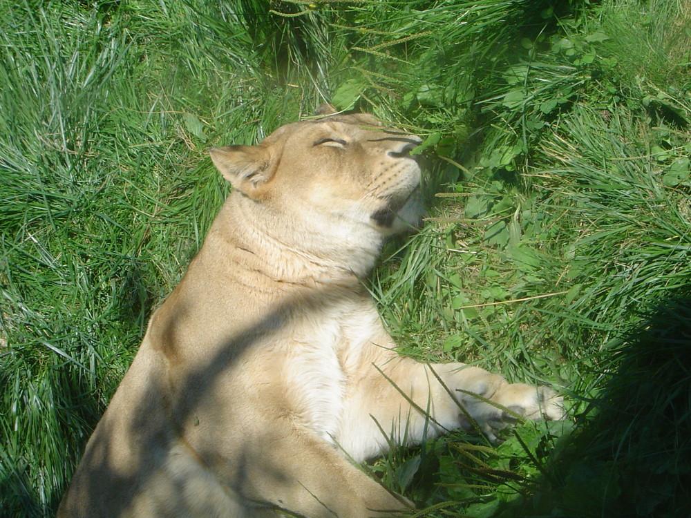 petite sieste au soleil
