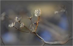 * petites fleurs *