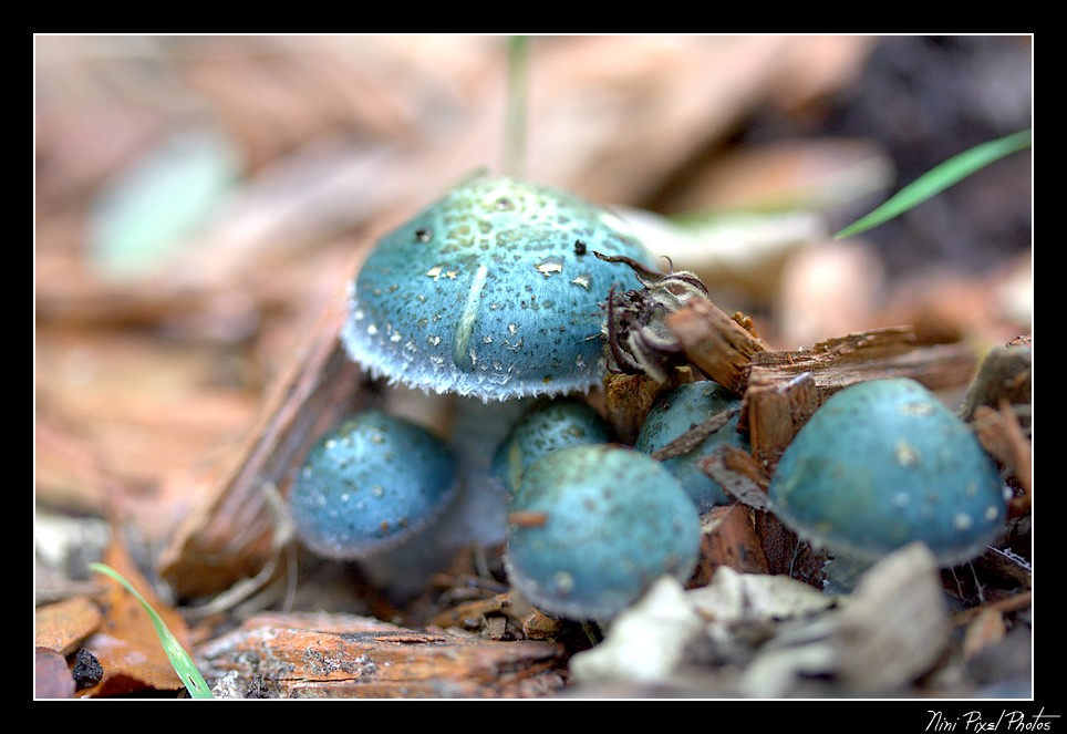Petits champignons...