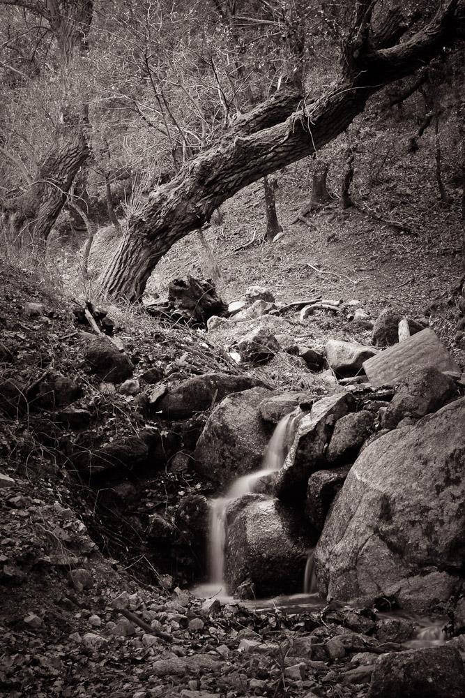 Peupliers et petit ruisseau