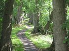 Pfad im Märchenwald