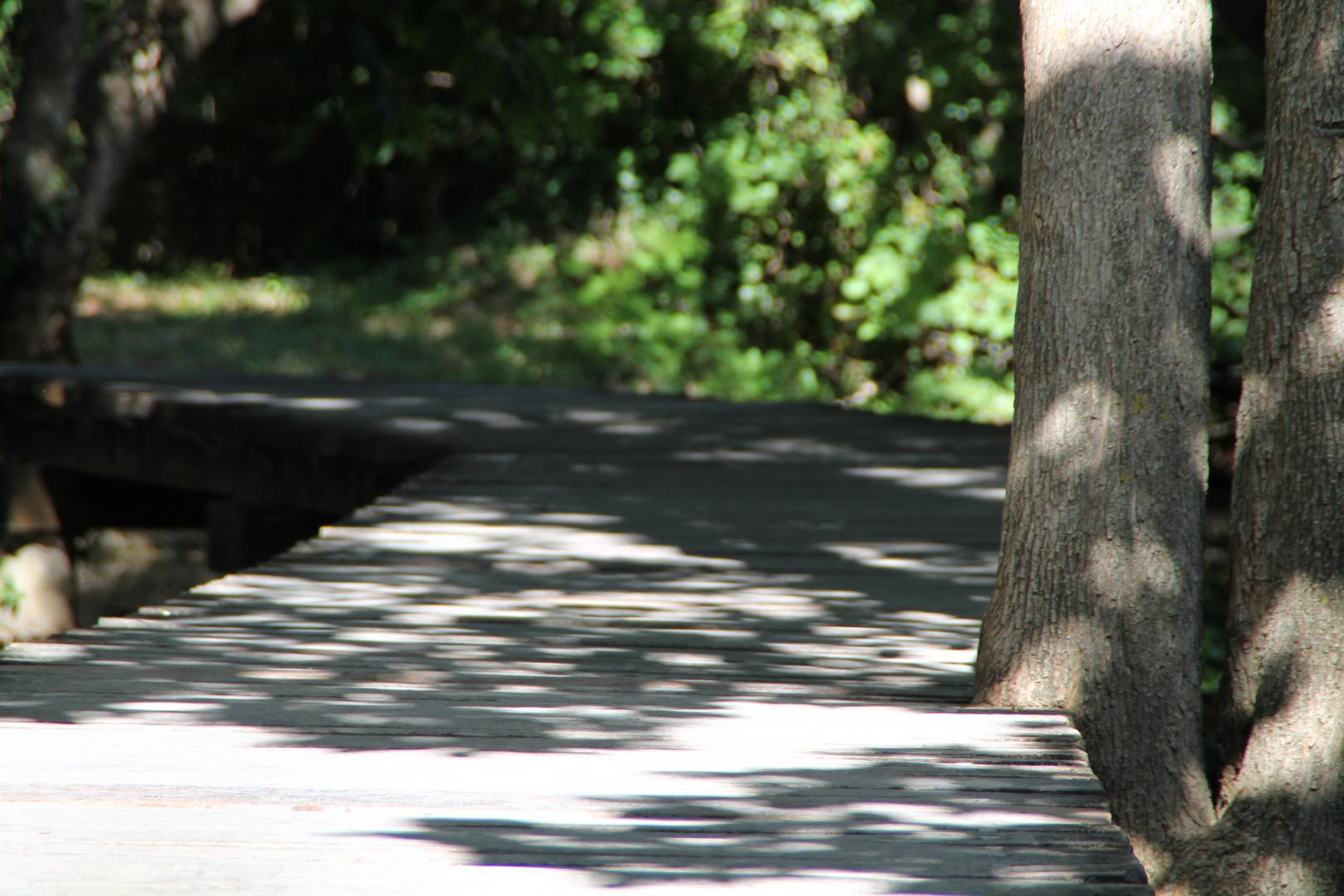 Pfad im Nationalpark Krka