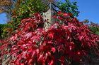 Pfälzer Herbst