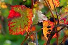 Pfälzer Herbstauslese (2)
