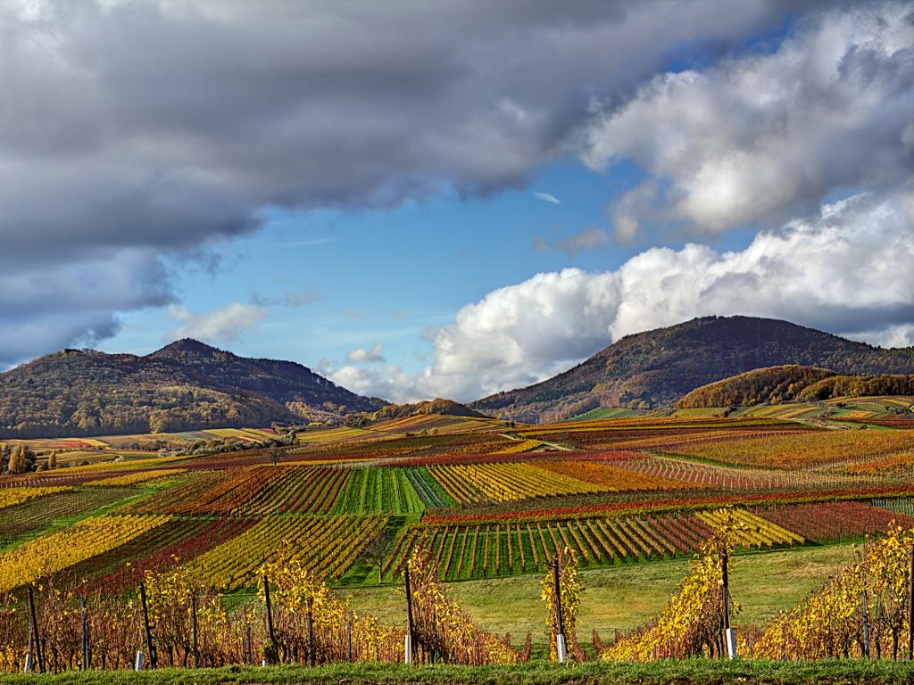 Pfälzer Weinberge im Herbst