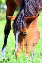 Pferd ♥