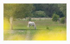 Pferd auf Blumenwiese