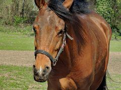 Pferd auf der Koppel...