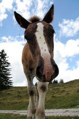 Pferd auf der Postalm