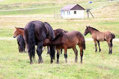 Pferd auf der Weide 2