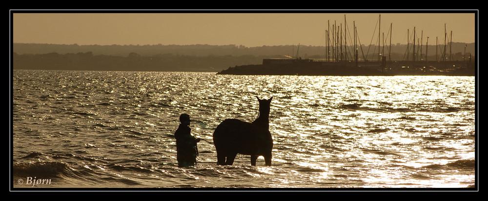 Pferd beim baden