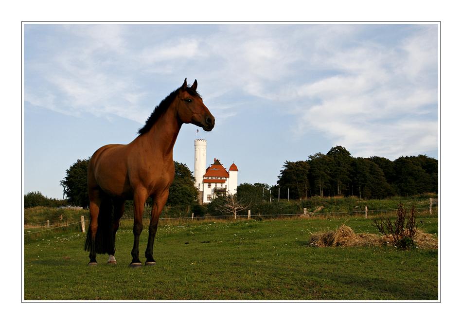 Pferd . . .