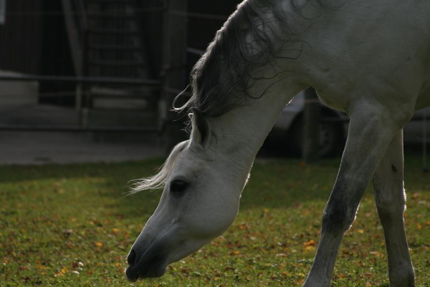 Pferd, Giraffe oder Tapir?