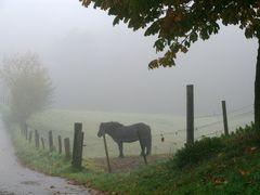 Pferd im Herbstnebel