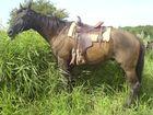 Pferd im hohen Gras